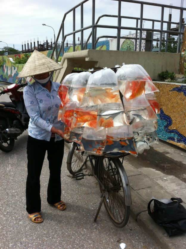 Vendeuse de poissons rouges, Vietnam (image source: blogspot)